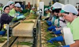 mujeres trabajando1